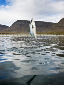 Umsögn um frumvarp til laga vegna fiskeldis